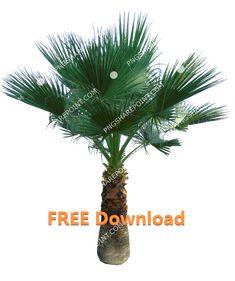 Cactus Plants, Palm Trees, Photoshop, Free, Image, Palm Plants, Cacti, Cactus