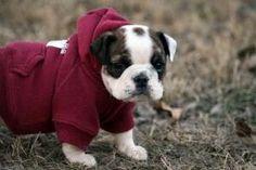 Don't judge me... gotta keep warm... #HappyAlert via @Happy Hippo Billy