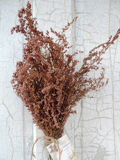 Dried Meadow Grass in Pink Blush Filler Flower Floral Supply Looks like Sweet Annie Natural Botanical Everlasting Hand Dyed Bouquet by VintagePolkaDotcom on Etsy https://www.etsy.com/listing/482683688/dried-meadow-grass-in-pink-blush-filler