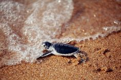 Kenya, Africa --baby sea turtles hatching and taking to the sea!  So cute & inspiring to take on life's challenges!  I wanna see this!