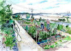 "Sketchy Everett V12 by Elizabeth Person: The Bayside Neighborhood ""P-Patch"" is a 1-acre community garden where  several dozen gardeners can have a plot of land to tend for a cool  $30/year."