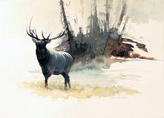 Challenger (Elk) by Mort Solberg