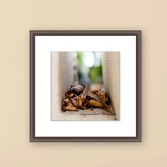 Leaves photograph nature fallen abstractfine by AngsanaSeedsPhoto, $45.00