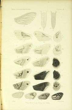 On the color and color-patterns of moths and butterflies (1897)