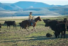 Raising cattle requires a lot of land, much more than most ranchers can afford to own outright... Utilizing federal land requires ranchers to follow an unfair, complicated and constantly evolving set of rules.