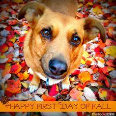 Happy First Day of Fall! #FallisHere #ZYMOX