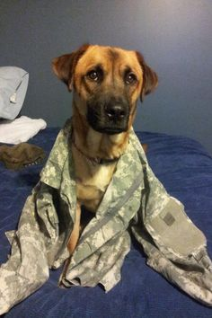 "Army Dog Hope you're doing well.From your friends at phoenix dog in home dog training""k9katelynn"" see more about Scottsdale dog training at k9katelynn.com! Pinterest with over 21,000 followers! Google plus with over 190,000 views! You tube with over 500 videos and 60,000 views!! LinkedIn over 9,400 associates! Proudly Serving the valley for 11 plus years! Now on instant gram! K9katelynn"