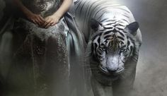 She sat there watching them. As they got closer her pets eyes gleamed, at the scare they were to have. White Bengal Tiger, Tiger Love, Favorite Book Quotes, What Image, Night Circus, Big Cats, Spirit Animal, Cute Animals, Giant Animals