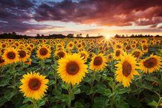 Sunshine by Michael  Breitung
