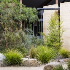 Photograph portfolio of native gardens and landscapes designed and built by Australian Landscape designer Sam Cox. Australian Garden Design, Urban Garden Design, Australian Native Garden, Landscaping With Rocks, Modern Landscaping, Front Yard Landscaping, Modern Patio, Landscaping Ideas, Modern Landscape Design