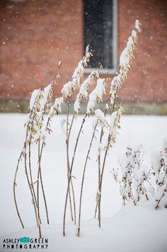 Winter Plants in New England Snowstorm Photo / by AshleyGreenPhoto