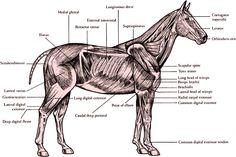 The anatomy!
