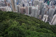 The Dizzying Cityscape of Hong Kong - The Atlantic. Commercial and residential buildings in Hong Kong, photographed on August 2014 Hong Kong Building, Hong Kong Architecture, Photos 2016, Urban Landscape, New York Skyline, How To Memorize Things, Environment, World, City