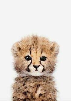 What cute little cheetah