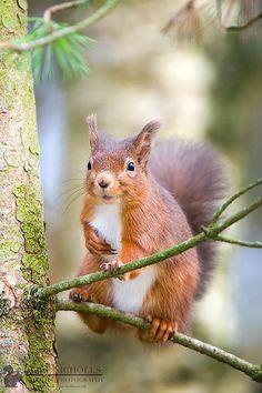 Patch, pretty little squirrel