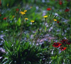 flowers ∞