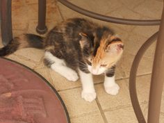 Gaïa bébé #chat #cat #chambredhote #bandb #cute #mignon #tarn #castelnaudemontmiral #gaillac http://lamaisonduchai.com/accueil.html