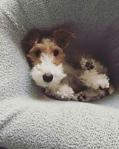 snuggle dog