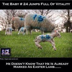 Vegan Facts, Vegan Memes, Vegan Quotes, Vegetarian Quotes, Vegan Vegetarian, Fondation Brigitte Bardot, Reasons To Be Vegan, Easter Lamb, Why Vegan