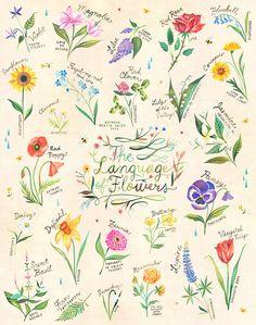 Floriography, o il linguaggio dei fiori è latto di attribuzione di significato alle varie fioriture per comunicare un messaggio. Floriography è
