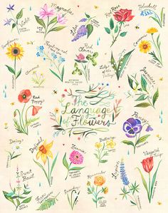 The Language of Flowers Art Print  Watercolor Hand Lettering