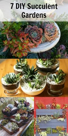 Succulent Gardens; easy instructions to follow and easy plants to care for :)
