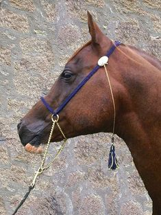 arabian horse halter with chain - Yahoo Image Search Results