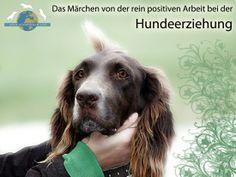Hundeerziehung Positive Arbeit
