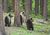 Kolme karhua (VM02) | Perromania - pieni postikorttikauppa