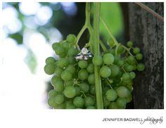 Lisa Matt S Asti Winery Dream Wedding Sonoma County Photographer