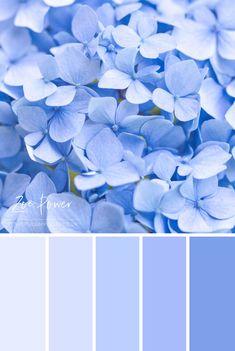 'Pastel blue Hydrangea Colour Palette' by Zoe Power Pastel Blue Color, Pastel Colour Palette, Blue Colour Palette, Bedroom Colour Palette, Pastel Paint Colors, Sky Colour, Vintage Colour Palette, Blue Shades Colors, Pastel Walls