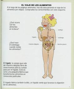 1000 images about el cuerpo humano on pinterest dibujo picasa and in spanish. Black Bedroom Furniture Sets. Home Design Ideas