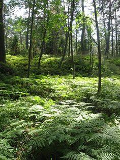 Pentala jungle