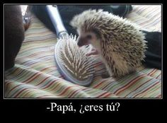 Papa eres tu ✿ Humor / Spanish humor / learning Spanish / Spanish jokes/ Podcast espanol - Repin for later!