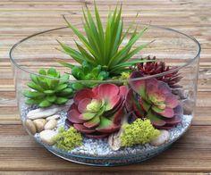 Assortiment plantes grasse