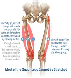 11 Muscles You Cannot Stretch
