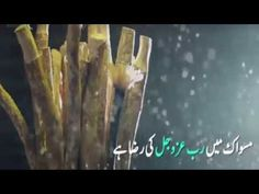 Amazing Benefits of Miswak with Quran aur Hadees Islamic Society, Quran, Benefit, Amazing, Holy Quran