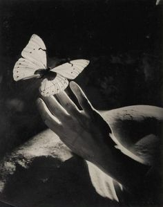 """Peter Rose Pulham - Surrealist Study with Hands and Butterflies, / There is nothing in the path of life that we don't already know before we start. Nothing truly """"important"""" is learned; it is simply remembered ~Carlos Ruiz Zafón (Photo: Peter Rose Pulham) Butterfly Effect, Butterfly Art, Butterflies, Butterfly Kisses, Foto Art, White Aesthetic, Draco Malfoy, Picture Wall, Slytherin"""