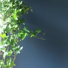 #green #viherkasvit #greeninterior #plants #vihersisustus #viherkasvit #muratti #greendecor #myhome #homedecor #newhome #uusikoti #homeinterior #interior #inredning #sisustus