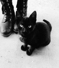 There was one particular cat who stayed with him more than any of the others; a sleek little black one with mismatched eyes. He called her Stars, and was always a little heartbroken when he had to leave her behind every evening.