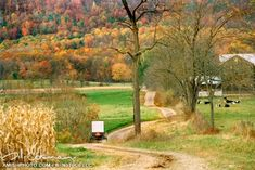 Amish Autumn Scenes, Pumpkins, Halloween and More Photos) Amish Farm, Amish Country, Country Life, Country Kitchen, Plain City, Amish Community, Halloween And More, Autumn Scenes, Halloween Pumpkins