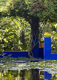 Garden Majorelle Garden, The aquatic plants, water lilies and Asian lotus flowers, along with the luxuriant vegetation in the garden, create a revitalizing contrast to the desert surrounding the city of Marrakech