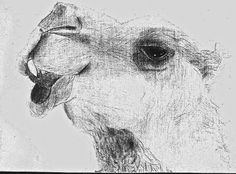 Camels of the Middle East. A drawing exercise for grades 7 & 8. Looking at line and shading.