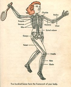 From All About the Human Body, 1958