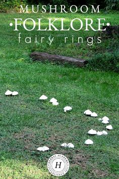 In this article, we will explore one of the more common mushroom folklore stories revolving around mushrooms growing in a circle—better know as fairy rings. Fairy Ring Mushroom, Mushroom Circle, Folklore Stories, The Quiet Ones, Fairy Doors, Nature Journal, Natural Phenomena, Faeries, Botany