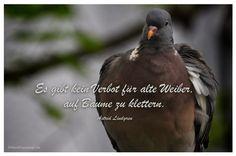 Mein Papa sagt...  Es gibt kein Verbot für alte Weiber, auf Bäume zu klettern. Astrid Lindgren   #Zitate #deutsch #quotes      Weisheiten & Zitate TÄGLICH NEU auf www.MeinPapasagt.de