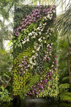 Patrick Blanc vertical garden wall - orchides #verticalgardens
