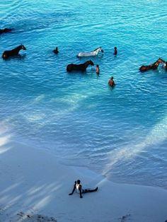 Home..Barbados Pebbles Beach