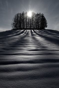 The sun and shadows… by Kent Shiraishi