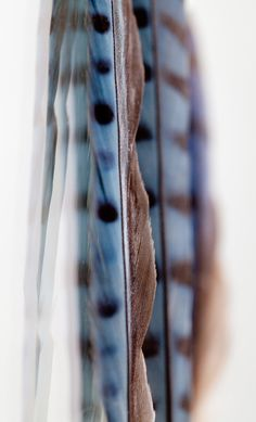 blue jay feathers